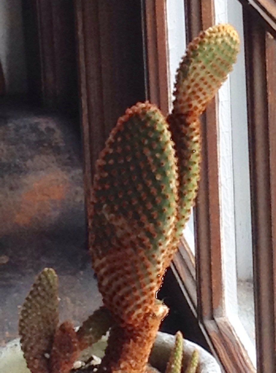 Cactus Spines/ Not 'not' just 'no'